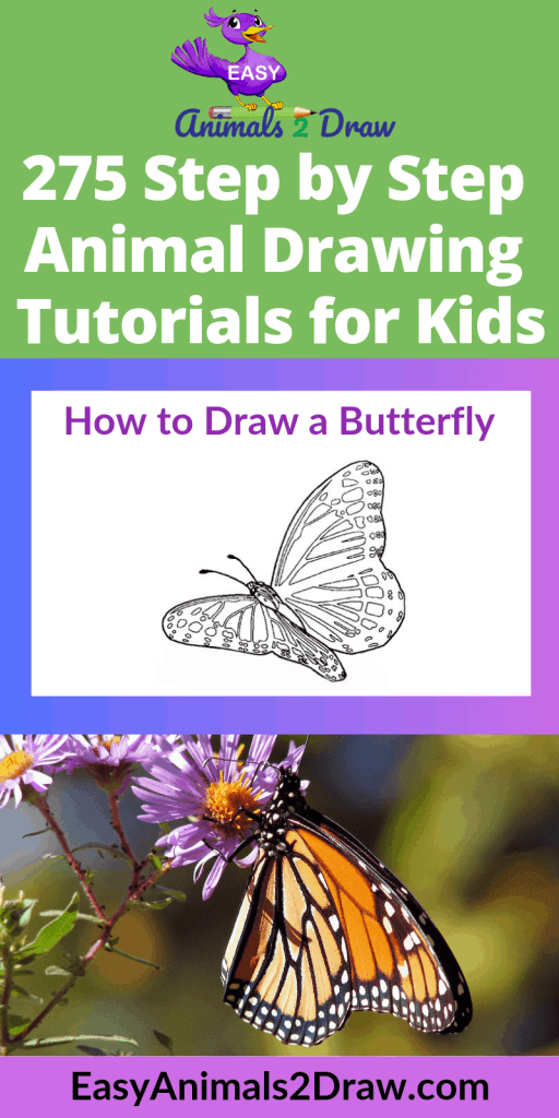 Pinterest image how to draw a butterfly on a flower