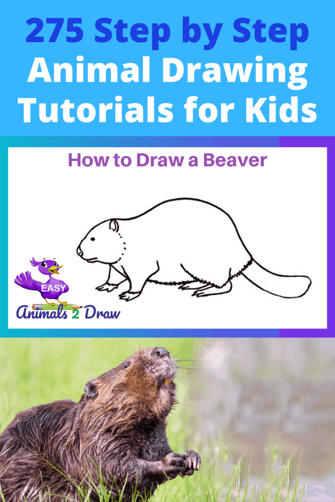 pinterest how to draw a beaver