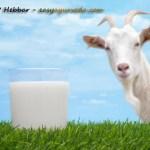 Goat Milk Benefits According to Ayurveda