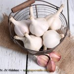 Milk Garlic Home Remedy For Stomach, Abscess and Fever