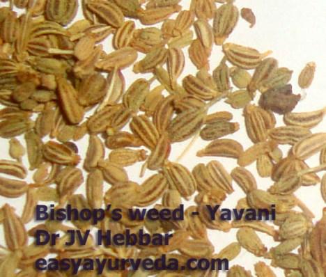 Yavani - Bishop's weed