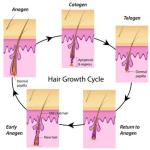 Description Of Hair And Its Importance As Per Ayurveda