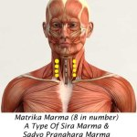 Matrika Marma: Components, Location, Effect Of Injury