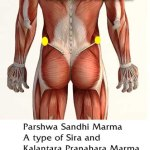 Parshwa Sandhi Marma: Components, Location, Effect Of Injury