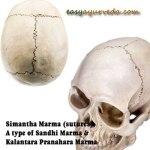 Simanta Marma: Components, Location, Effect Of Injury