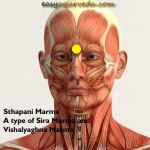 Sthapani Marma: Location, Components, Effect of Injury
