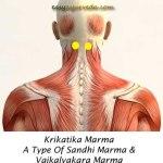 Krikatika Marma: Components, Location, Effect Of Injury