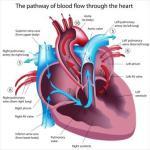Hrid Roga: Causes, Types, Symptoms of Heart Disease As Per Ayurveda