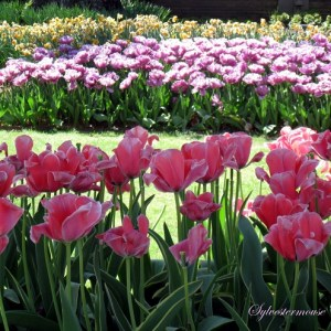 Beautiful bulbs for fall planting spring blooming easy backyard one of the easiest ways to add beauty to your spring garden is by planting bulbs in the fall it does require a small amount of planning ahead though mightylinksfo