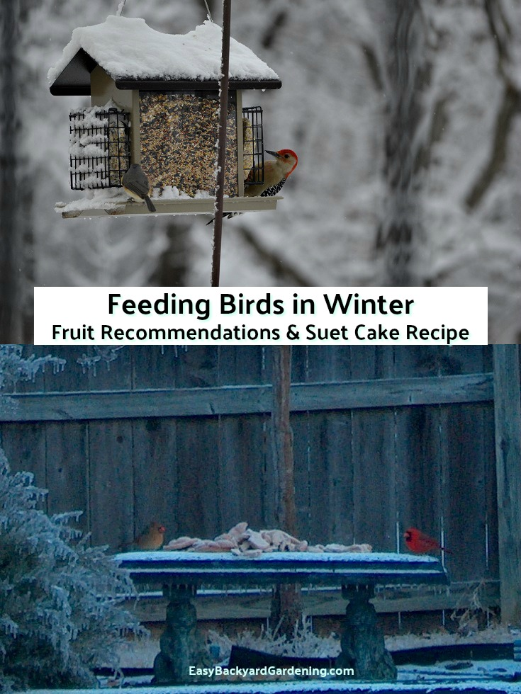 Bird food for Winter - Suet Cake Recipe