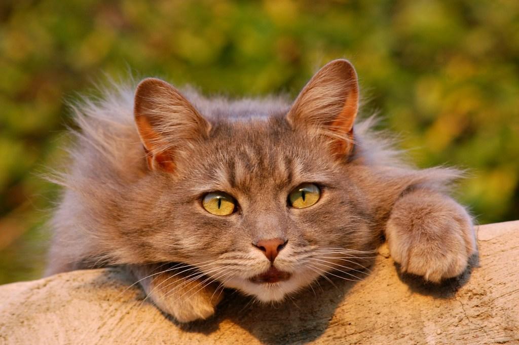Katze Sonne