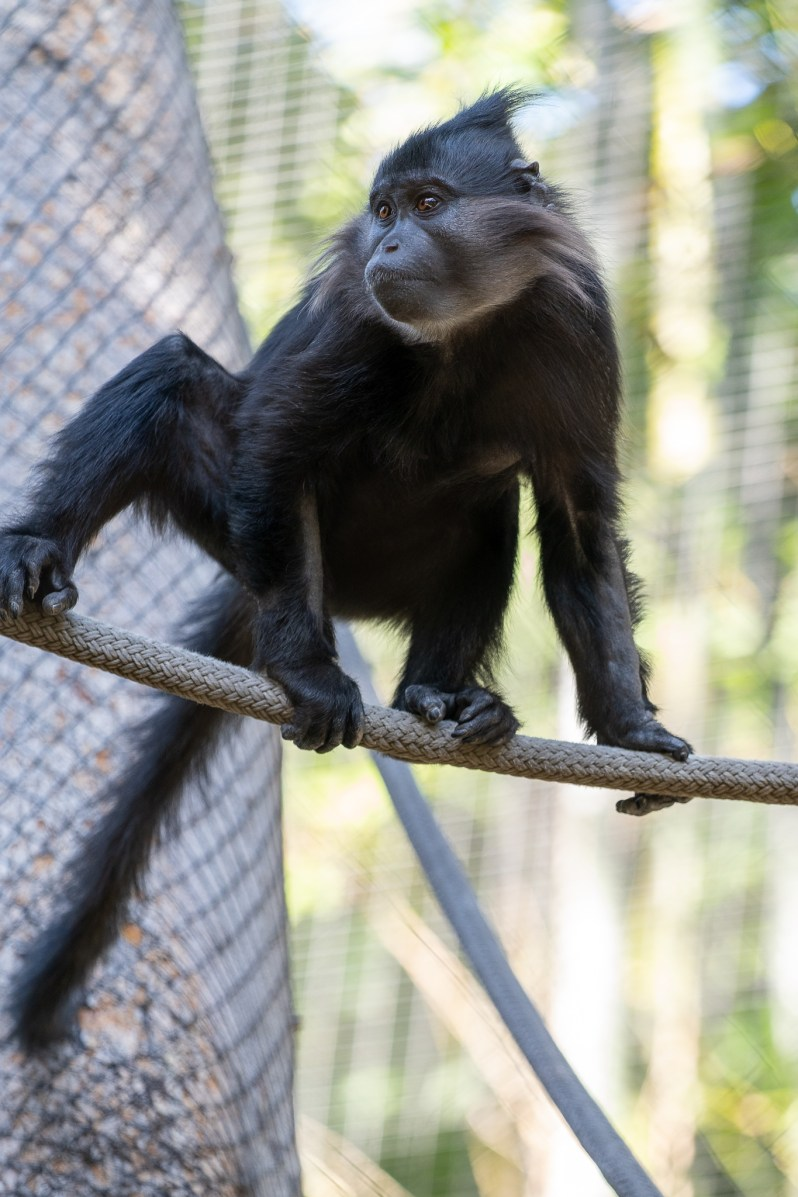 American family vacation  - San Diego Zoo monkey