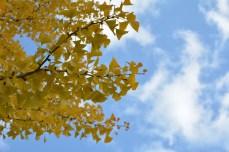 鶴見緑地の紅葉2014その14