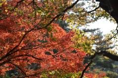 鶴見緑地の紅葉2014その21