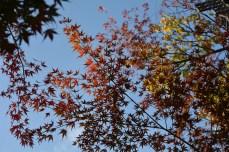 鶴見緑地の紅葉2014その27