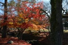 D7100で撮った奈良公園の紅葉 その13