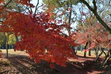 D7100で撮った奈良公園の紅葉 その15