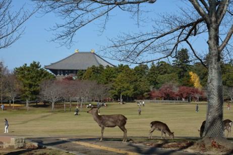 東大寺と奈良公園の鹿
