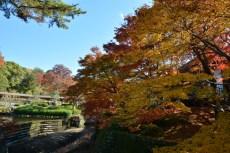 D7100で撮った奈良公園の紅葉 その16