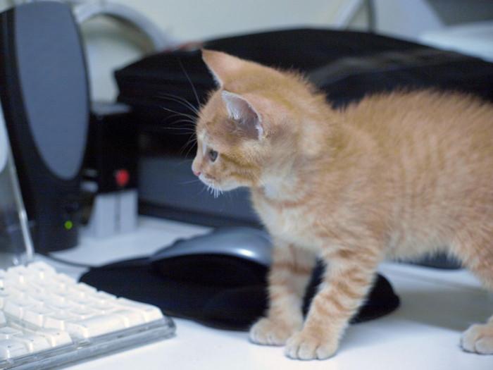 自宅でパソコンを使う時代は終わりつつある