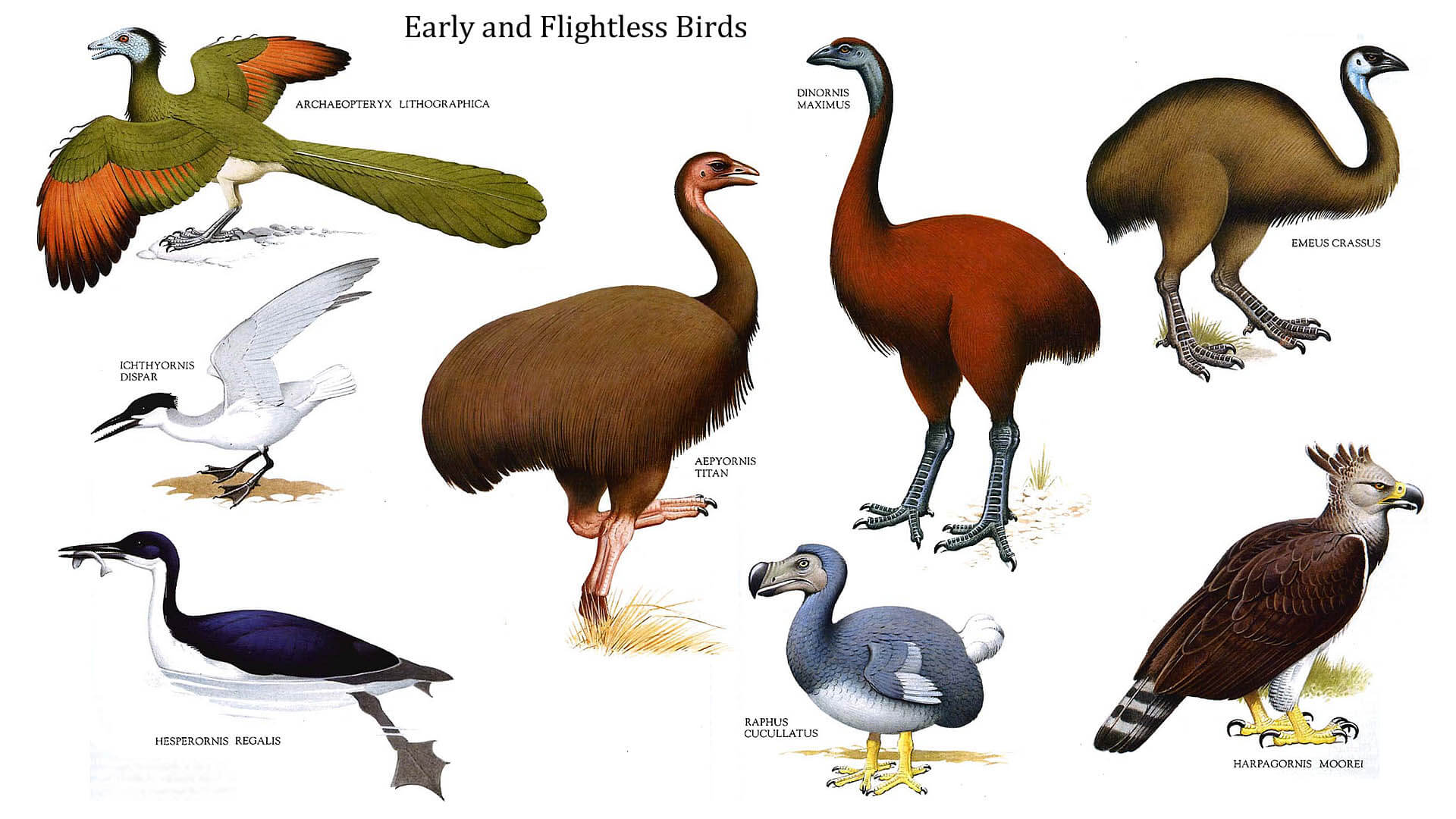 Interesting Facts About Flightless Birds Archives