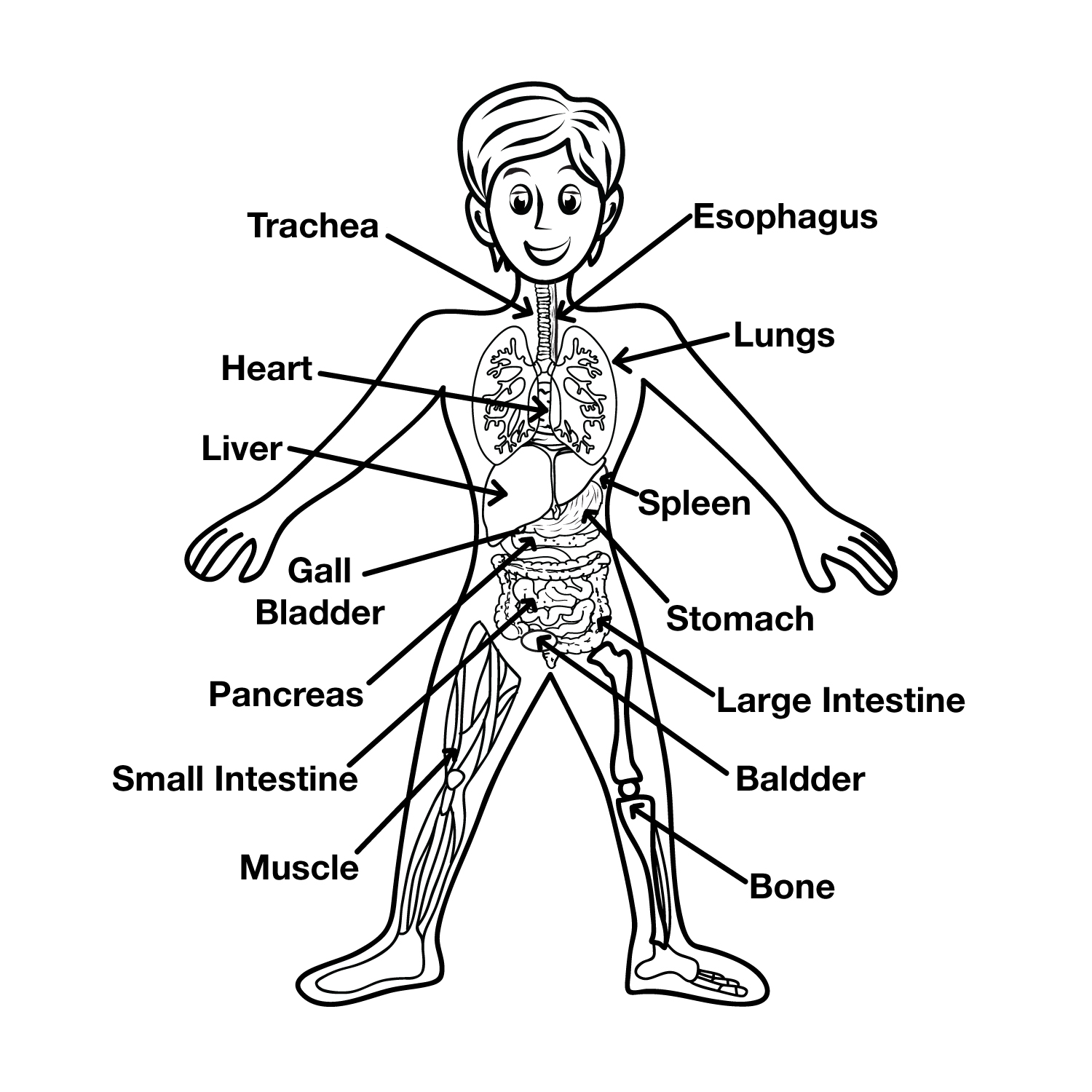 Fun Interactive Systems Of The Body Quiz Free Quiz Games