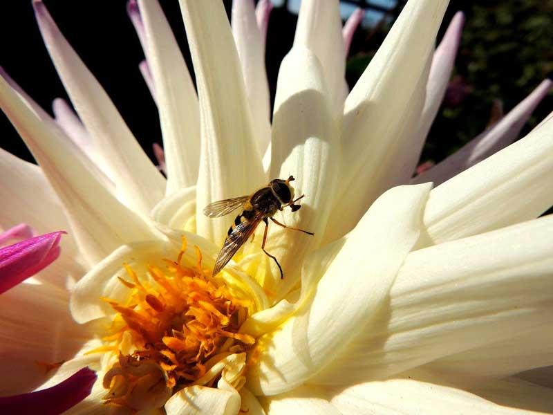 lutter contre la mouche a fruit