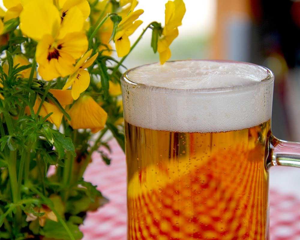 pieger le frelon asiatique avec de la biere