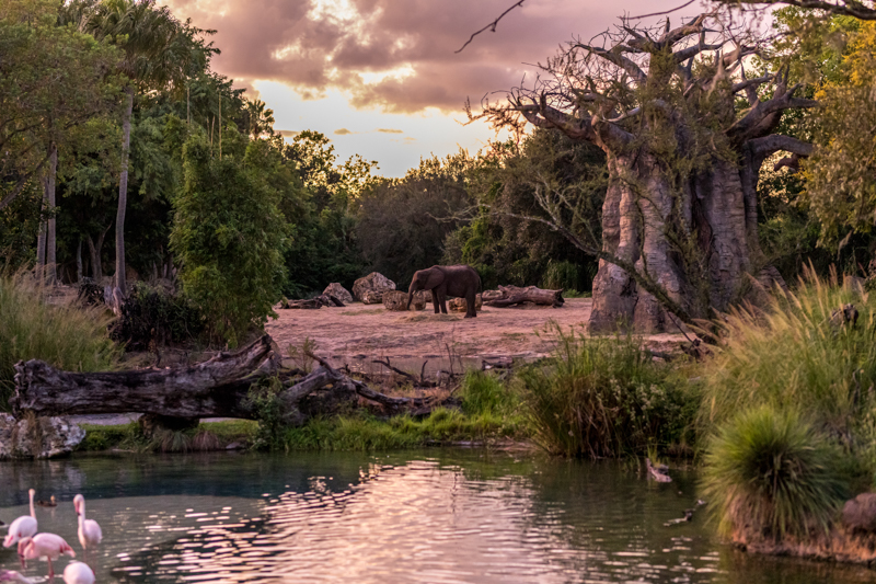 Kilimanjaro Safaris Nighttime Safari