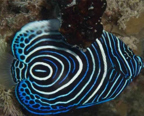 pesci coorati zanzibar img