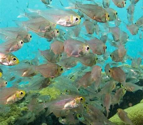 scatto subacqueo zanzibar