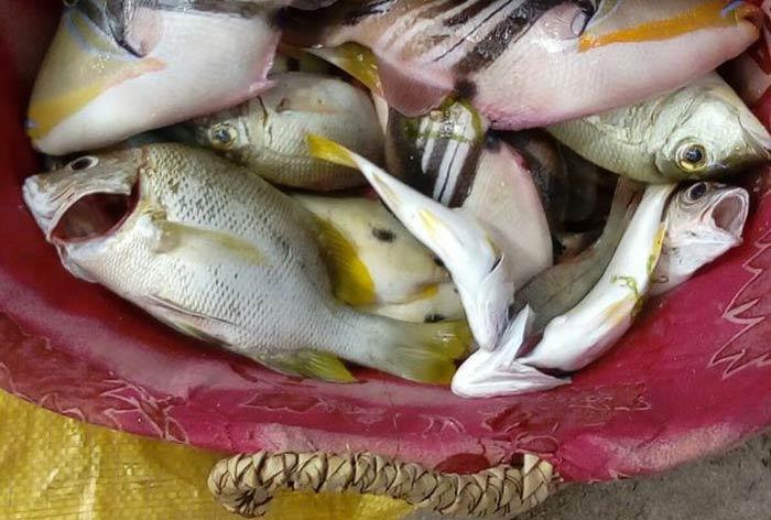 mangiare pesce a zanzibar img