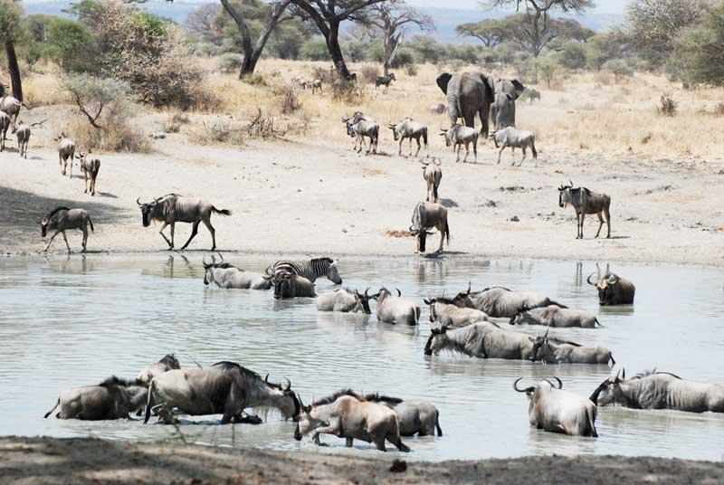 Tarangire Tanzania Safari