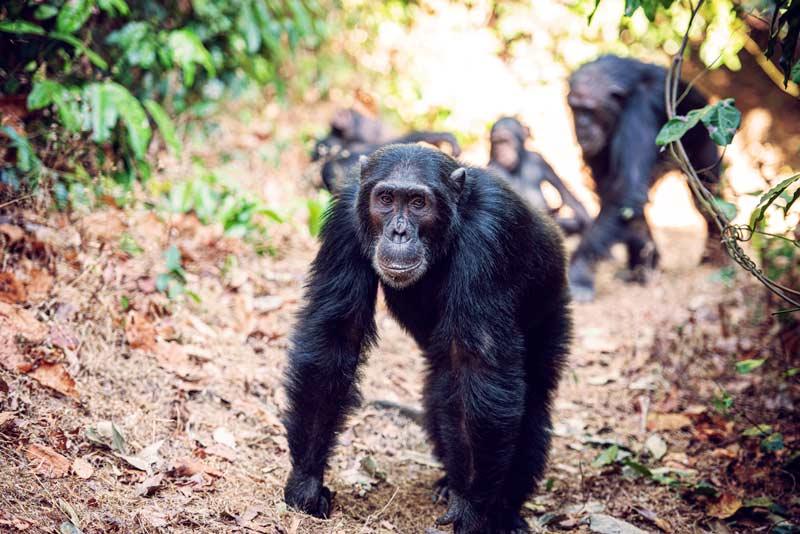 Gombe-National-Park