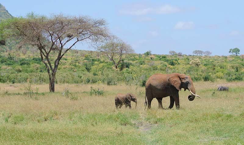 elefanti-safari-zanzibar
