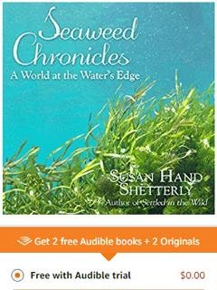 seaweed chronicles an audio book