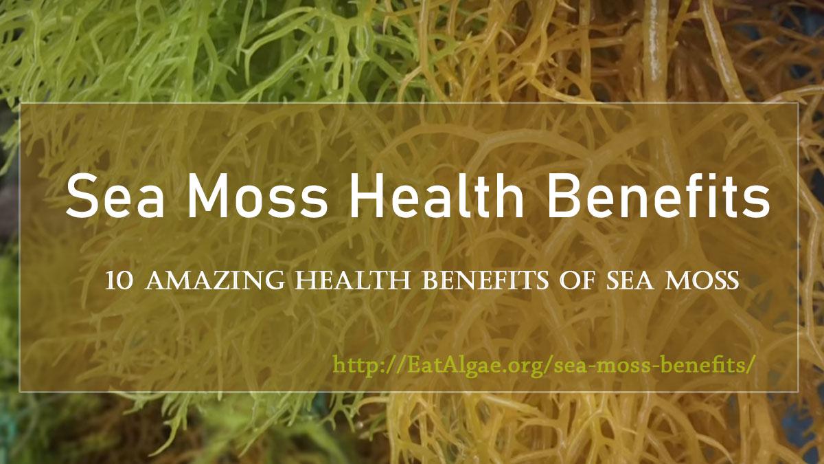sea-moss-benefits