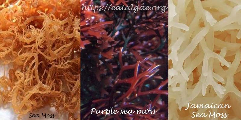 types-of-sea-moss