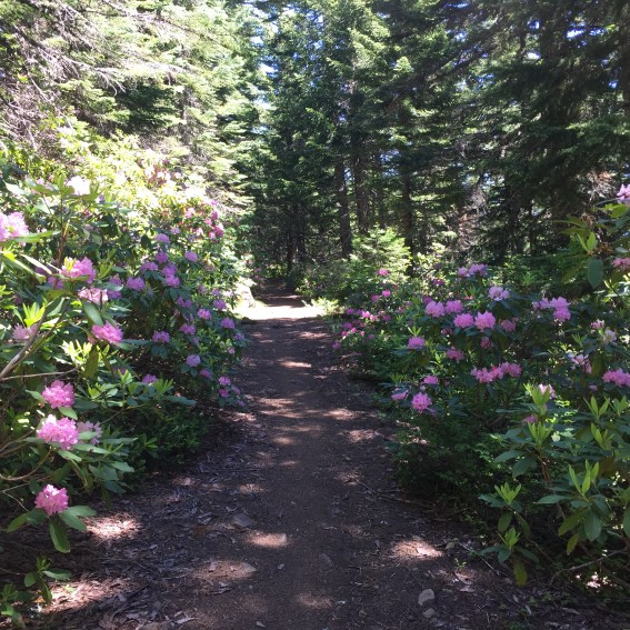 Forêt de Rhododendrons