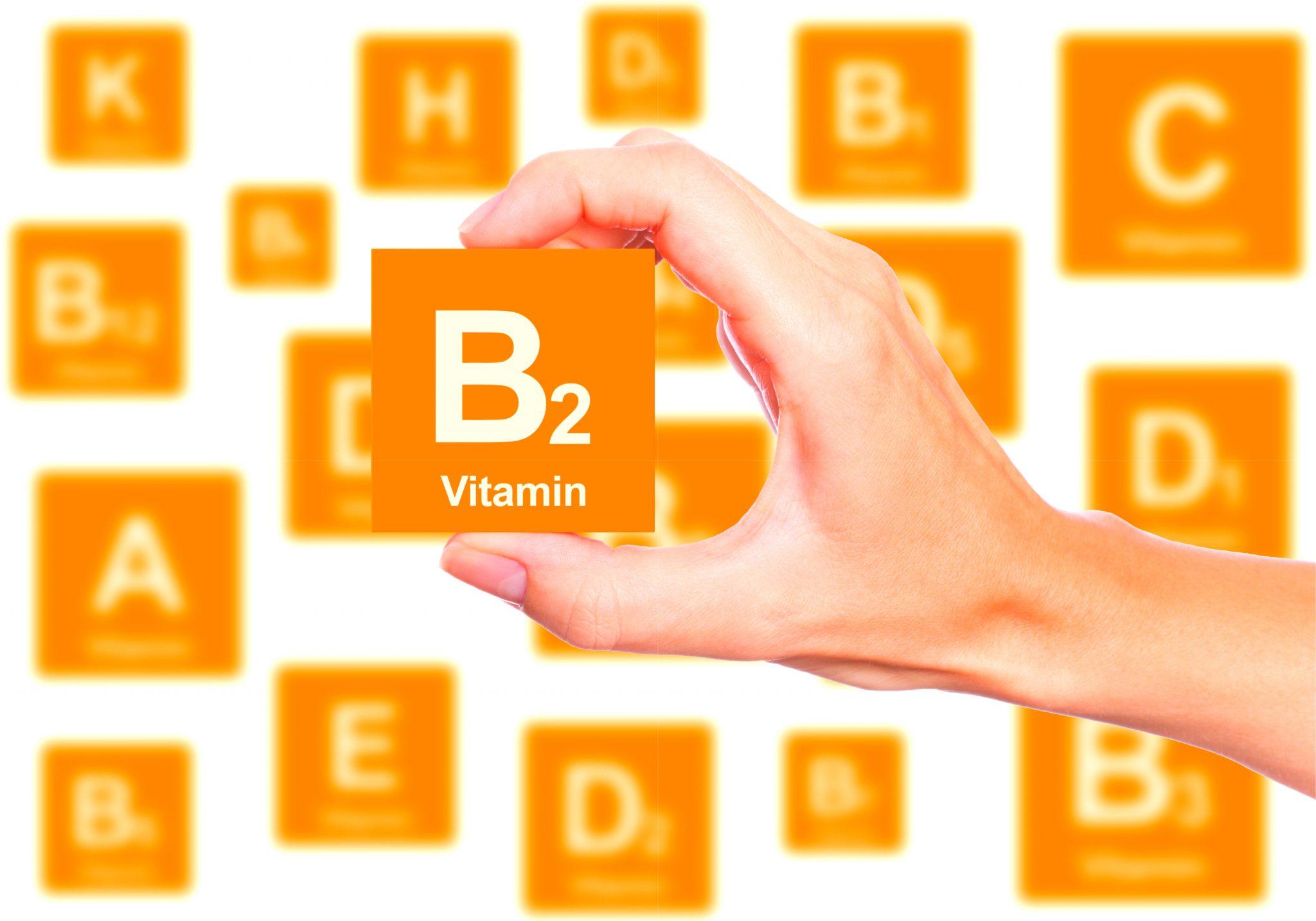 ビタミンB2のブロックを持っている手