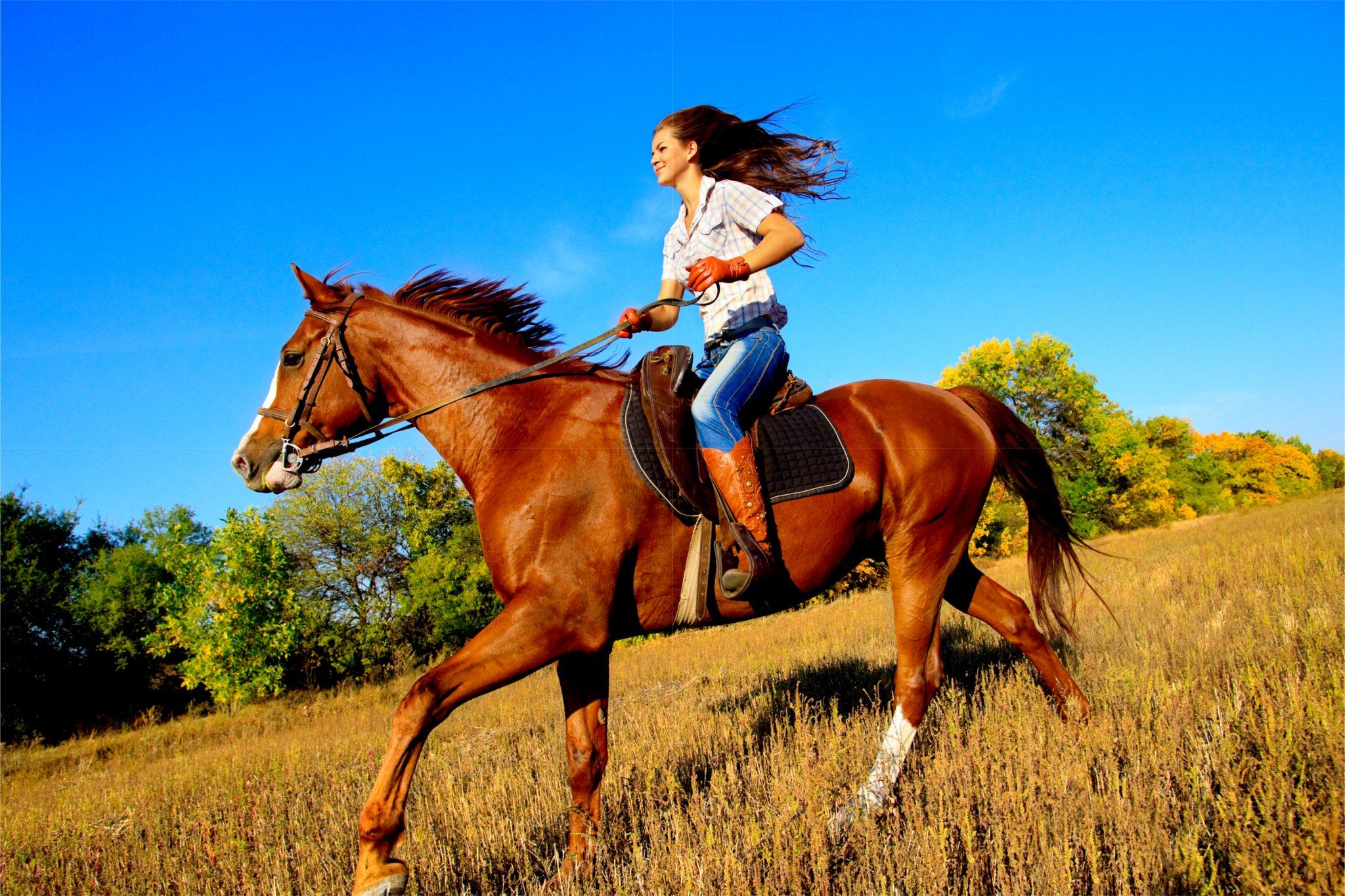 馬に乗ってる美女