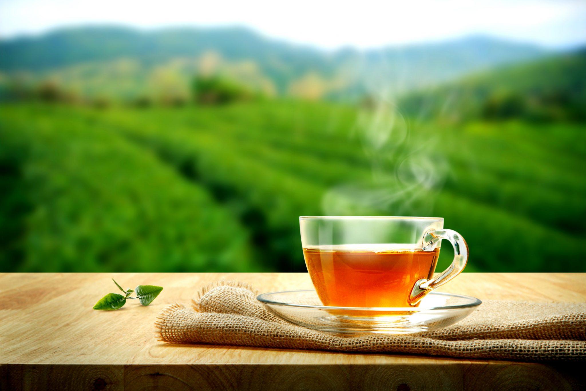 自然の中で飲む出来立ての緑茶