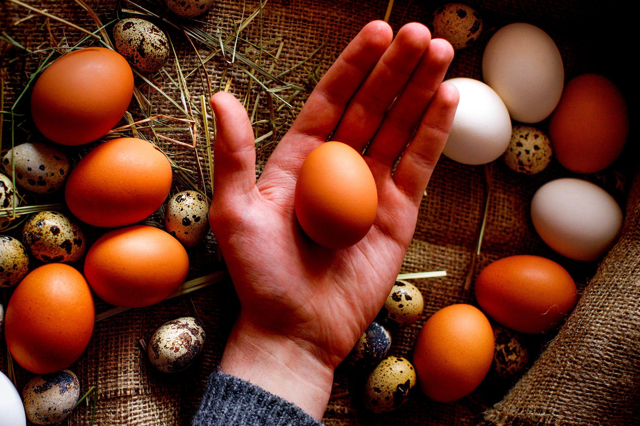 卵を手のひらに乗せいている人