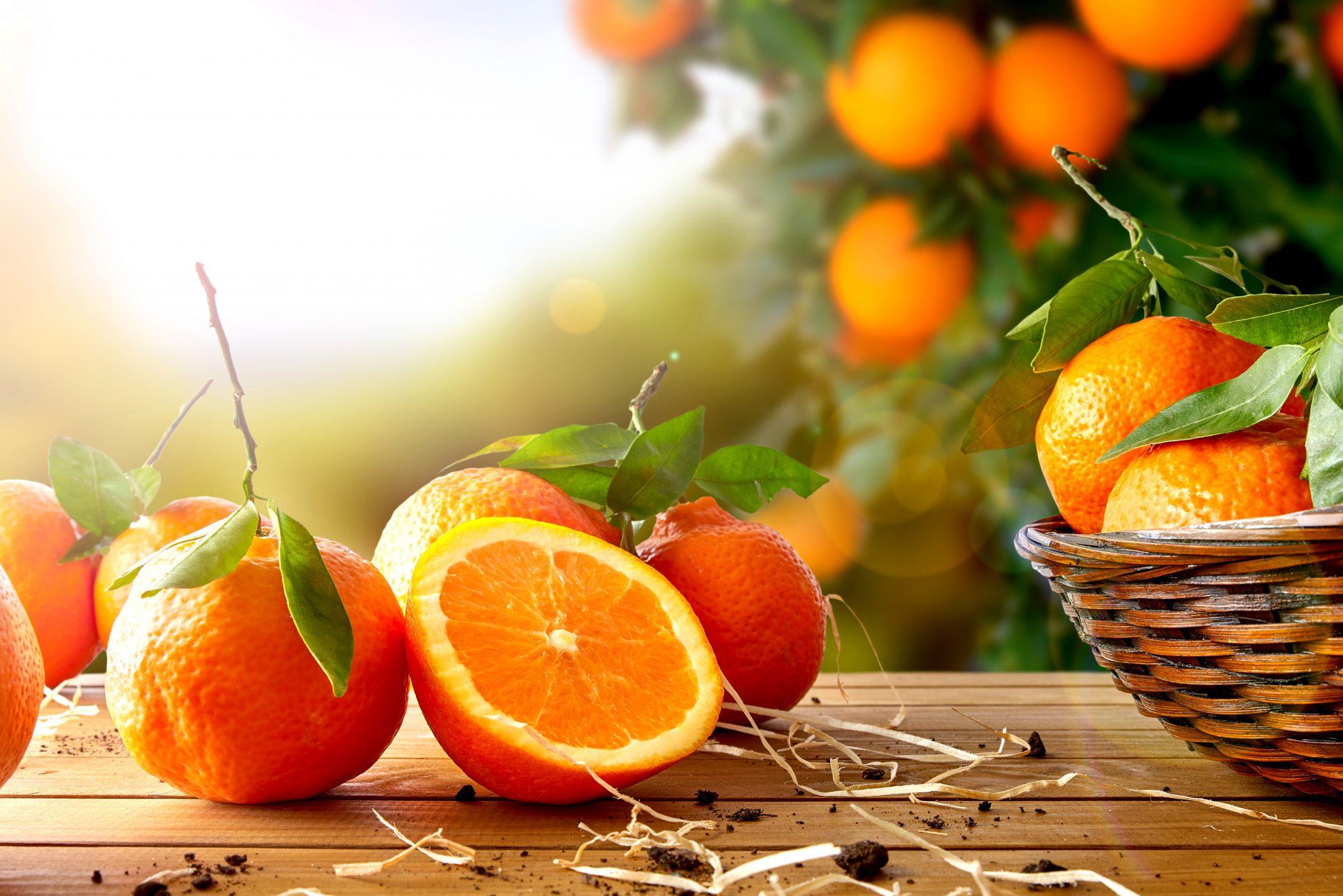摘み立てのオレンジ
