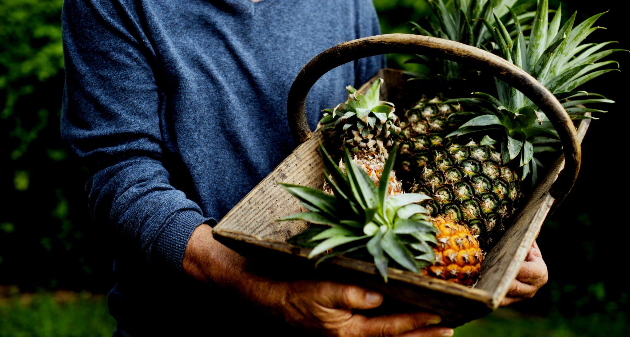 採れたてのパイナップルを抱えている男性