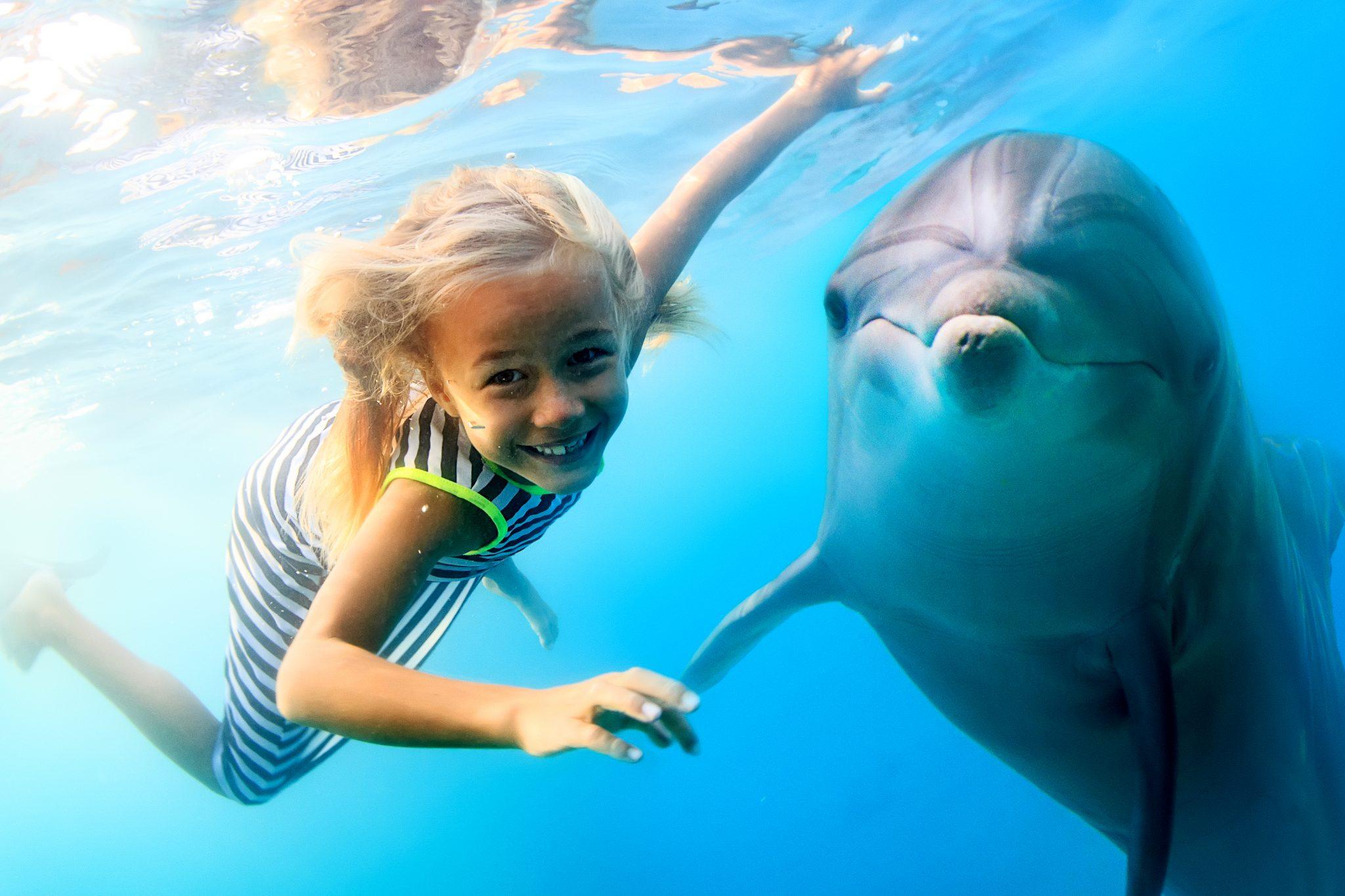 イルカと遊んでリラックスしている女の子