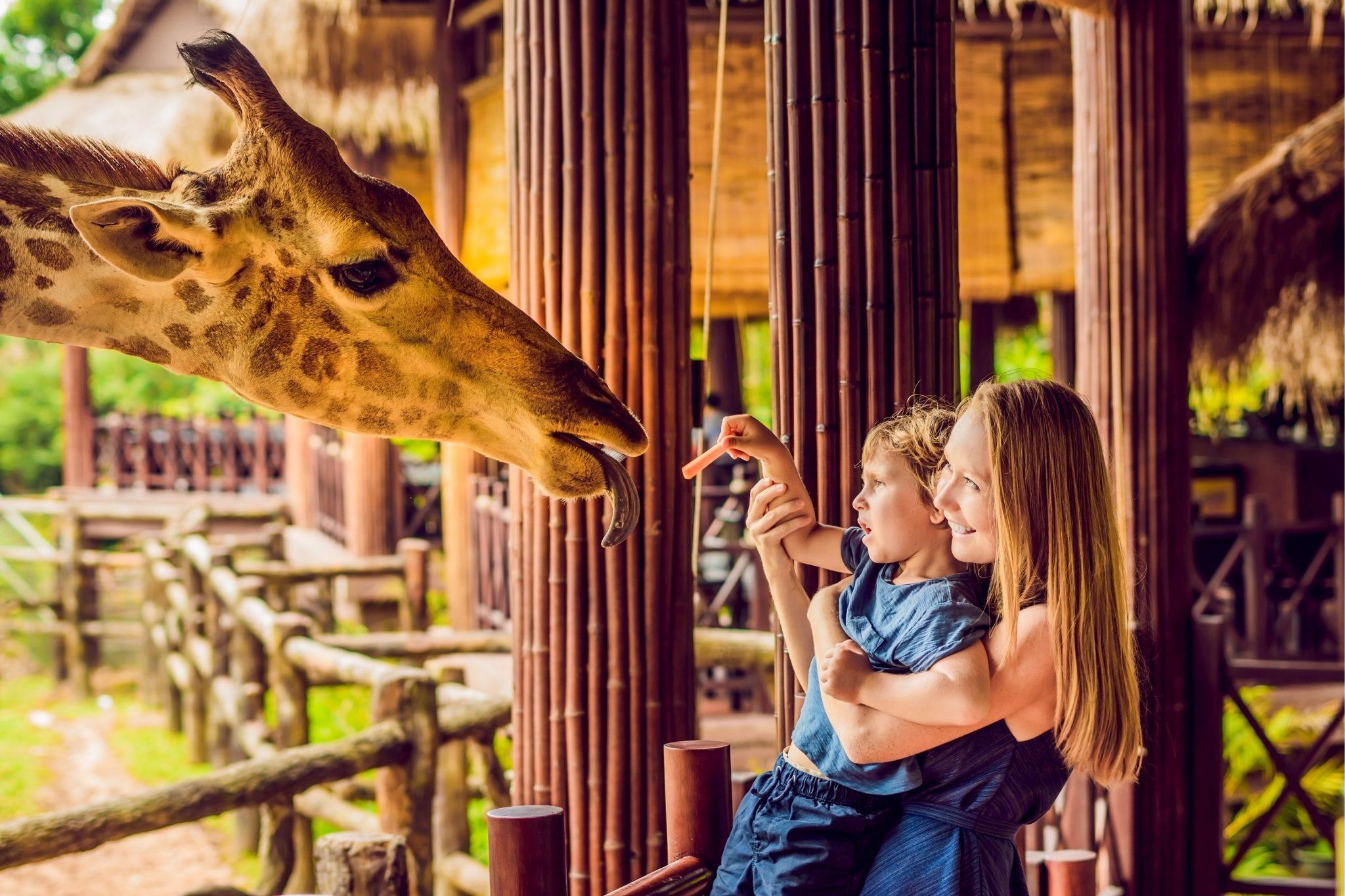 動物園でお母さんに抱っこされた男の子がキリンに餌をあげている