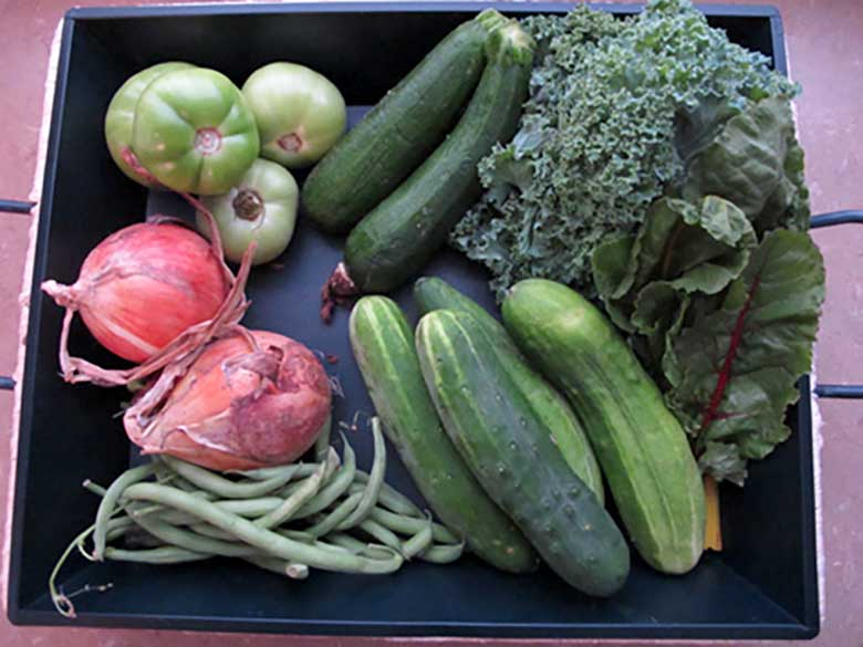 Farmshare Chronicles | eatatkates.com - Summer is sneaking towards fall, so it's time to put together the End of Summer Bucket List to take advantage of the season! Plus, a farmshare update.