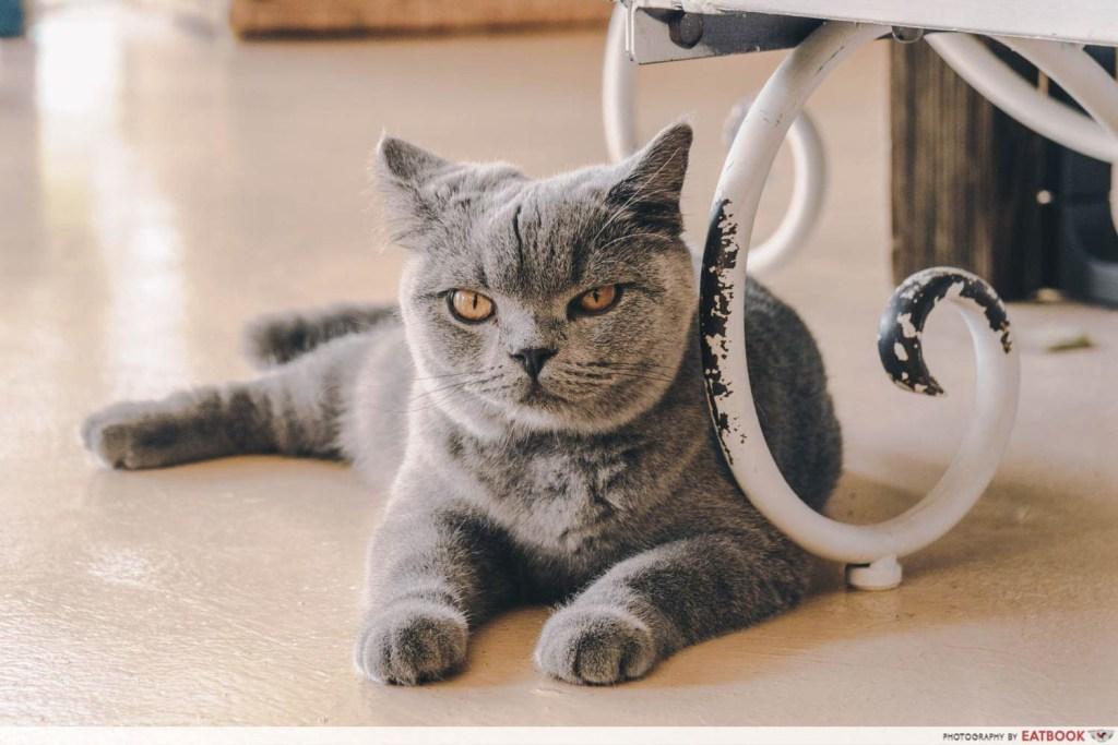 Pet-Friendly Cafe - Cafe de Nicole's Flower cat