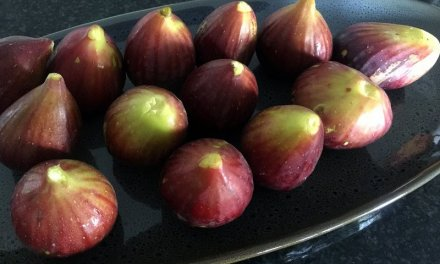 Get hooked on the flavour of a farm fresh fig